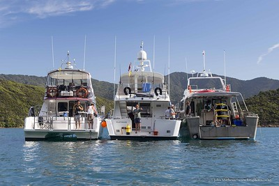 20160206 - D'Urville MAD Dive trip _MG_8071 b