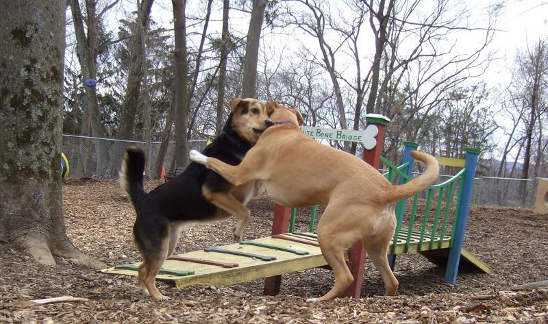 MONTY (from Montserrat),  MADDIE (indiana stockdog) PLAYMATES