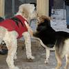 Bailey (birthday 4yr ), Maddie 2(jan27)