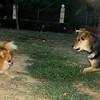 Pom (dog), Maddie_001
