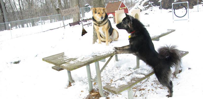 Finley, boy, LOVE, Maddie, boyfriend, ossining, snow