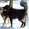 Mister Bear and Maddie, Boyfriend, Snow Kiss