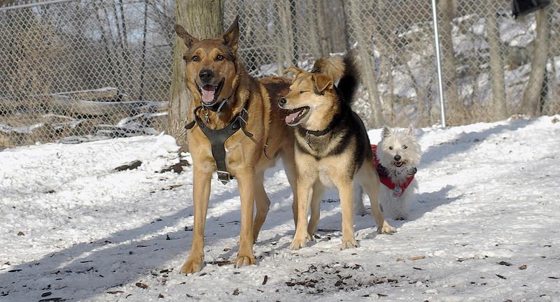 Buddy (GS), Maddie, Isabella_00001