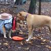 MONTY (island dog), MADDIE (cowgirl) PLAYMATES