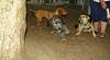 Oreo (puppy new), Maddie 001