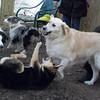 MARLEY (boy pup) & PUMPKIN, MADDIE