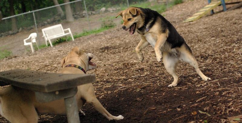 LUCY (pitbull) & Maddie_22