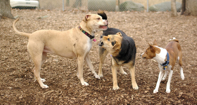 maddie, lenny, Lucy 2