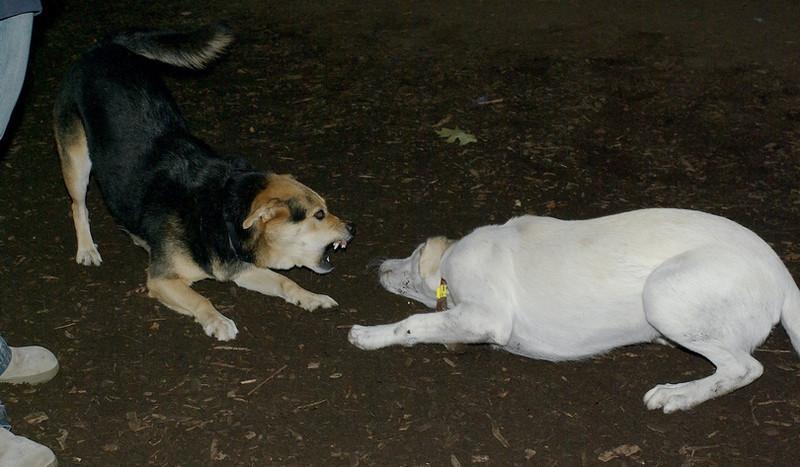 IVY (pup), Maddie_00003