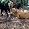 LUNA (puppy) & Maddie 16a
