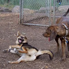 PEPPER (plott hound), Maddie