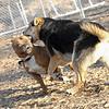 CHIP (Staffordshire Bull Terrier), maddie