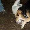 IVY (pup), Maddie ( tuff luv)(oct 06)