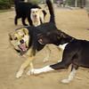 Maddie and pup Sade Fangs and Kisses
