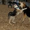 Buddy (puppy), Maddie_14