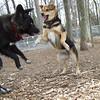 MR BEAR & Maddie leaps