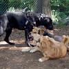 LUNA (puppy) & Maddie & Monday