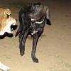 Fifty (puppy), Maddie_004