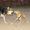 """Arenita, Maddie. Arenita was one of the GREATEST puppies EVER. Died, poisoning. Here's Maddie in her classic """"I demand respect mode."""""""