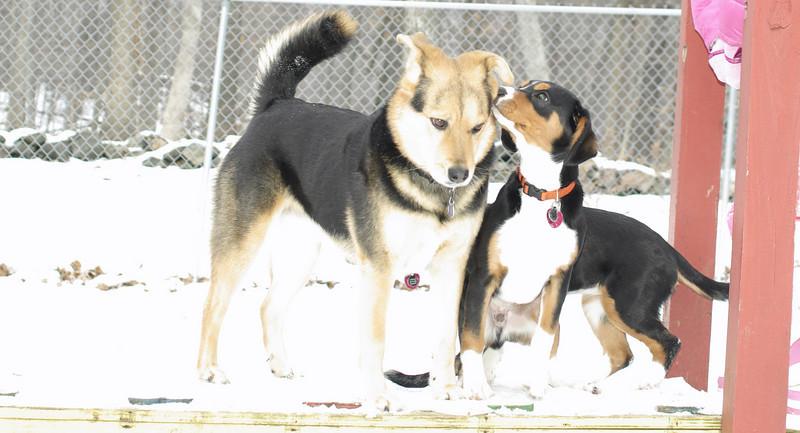 puppy pair, maddie_003