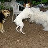 petey, belle, maddie_001
