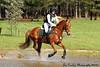 Eleanor Lawson and Matapeake 1st Senior Beginner Novice Rider
