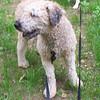 EDDIE (the actual dog)