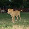 Arenita, puppy, girl