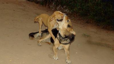 Arenita; Maddie; ; snout; grab; friend; ayora; puppy; mommy