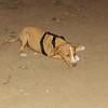 Arenita (puppy girl)_002v