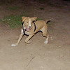 Arenita (puppy girl)_001a