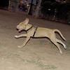 Arenita (puppy girl)_002r