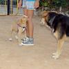 Arenita, puppy, girl, Maddie