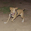 Arenita (puppy girl)_001