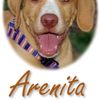 Arenita (homepage)