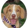 Arenita (puppy girl 2mo  1st time)_014