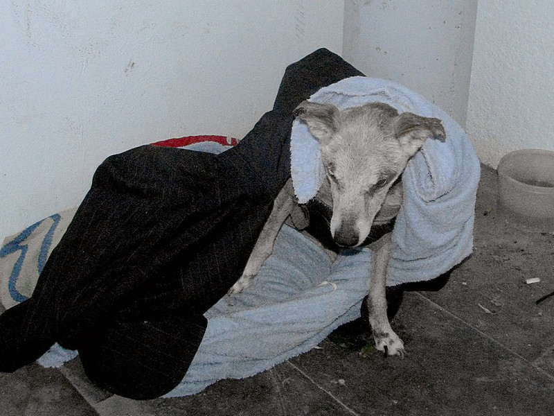 Jaen in the box of blankets where he use to live on the street