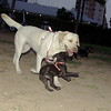 Duna (girl), Mora (puppy)_001