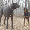 ROCKY R. & HARLEY (04-17-07)