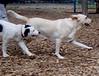 MARLEY (puppy), Barni