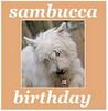 sambucca b-day 2