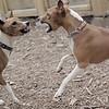 Shamus & Chloe