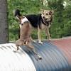 Shamus (basenji), Maddie (stockdog), TUBE