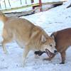 Skye & Mijo 2