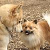 Skye & Leo