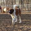 FINN st bernard pup (03-09-07)