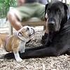 Harley, puppy