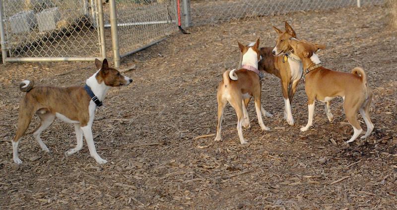 Chloe, Tayda, Shamus, Lenny