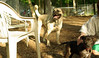 Baby (rescue puppy), Luke_00001