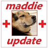 maddie update cover